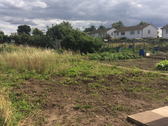 Whitestone Allotment